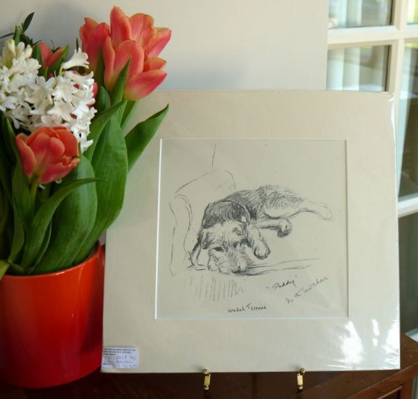 Welsh Terrier - lying on an armchair 1930's print by Lucy Dawson